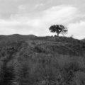 paysage_01